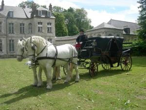 Les Chevaliers de Flandre et d'Artois